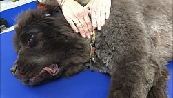 canine manuelle Lymphdrainage 2019