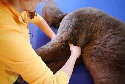 1. Kompaktkurs canine Manuelle Therapie der Extremitätengelenke